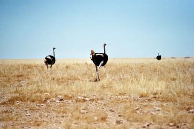 Namib Naukluft NP